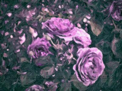 hoa hong 11