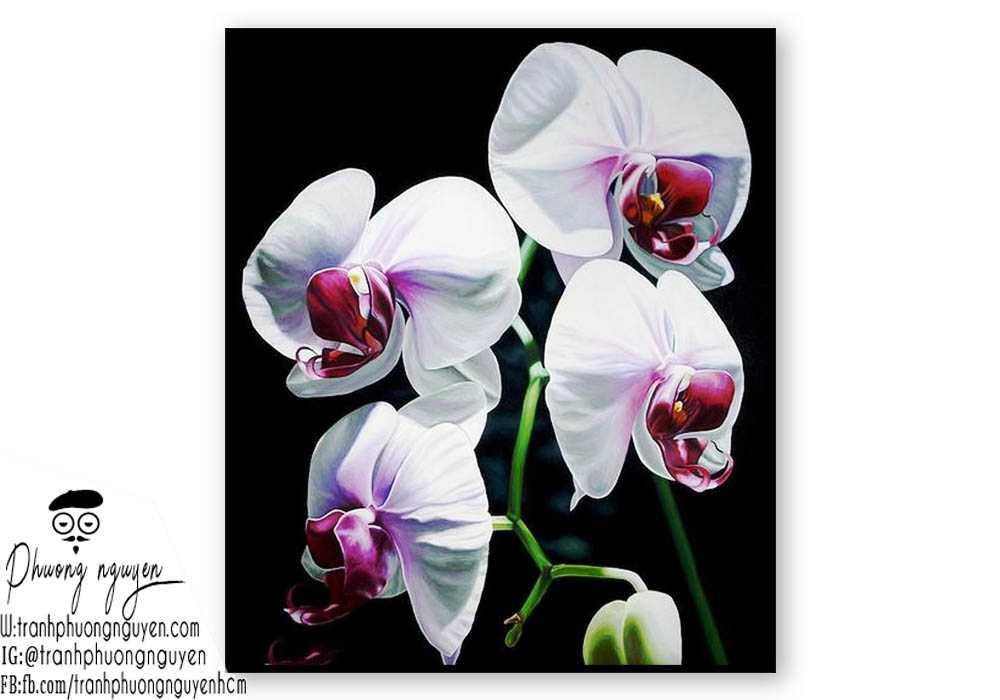 Tranh hoa lan  - PN1414