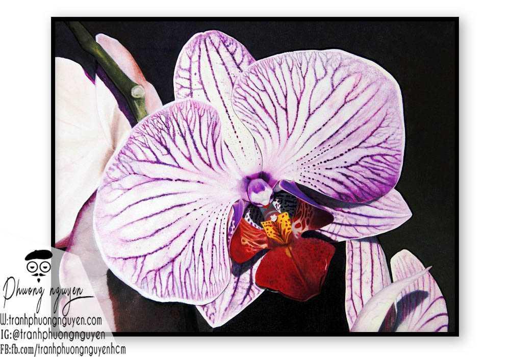Tranh hoa lan - PN1425