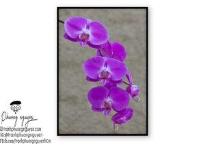 Tranh hoa lan  - PN1429