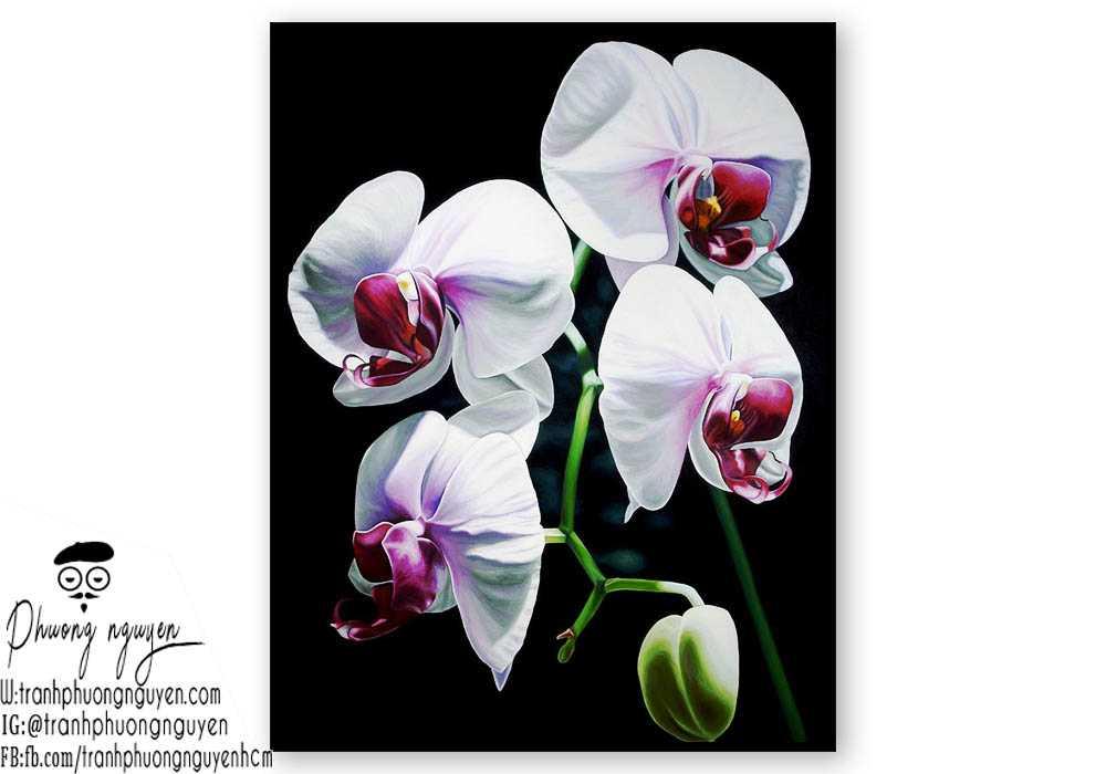 Tranh hoa lan - PN1434