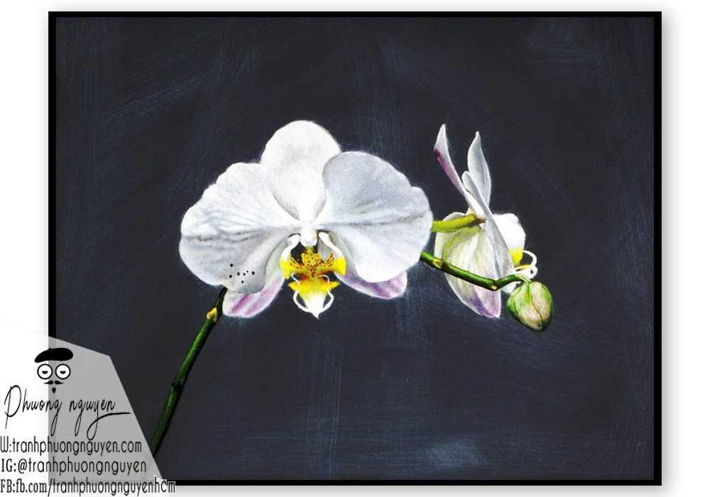 Tranh sơn dầu hoa lan - PN1402