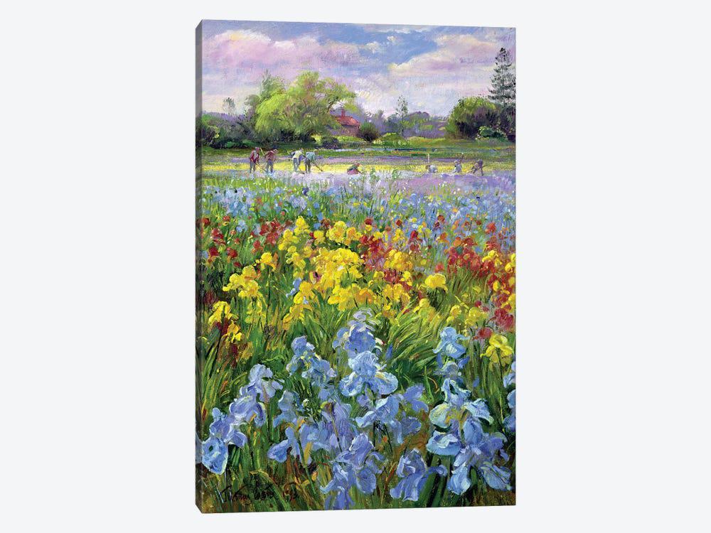 tranh phong cảnh mùa xuân - tranh phương nguyên